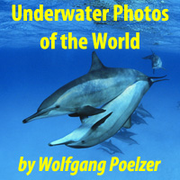 Underwater Photos of the World by Wolfgang Poelzer